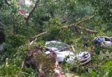 День города Вологды может быть подпорчен: МЧС объявило штормовое предупреждение