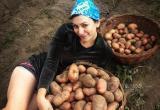 Плохие новости: Россиянам запретят продавать картошку со своего огорода