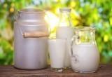 Вологодская область занимает 12 место в России по производству молока
