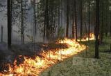 Экстренное предупреждение МЧС: на территории области высокая пожарная опасность