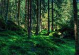В августе жителям некоторых районов Вологодской области может быть запрещен доступ в лес