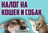Россиян начали готовить к налогу на домашних животных: Первый этап - регистрация и учёт, второй этап - чипирование