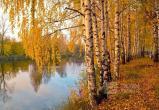 Гидрометцентр пообещал вологжанам бабье лето и бархатный сезон