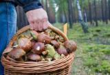 Трое грибников пропали в Вологодском лесу: поиски ведутся второй день