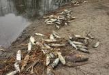 Жители Вологодской области стали свидетелями массового замора рыбы на реке Матинге