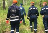 В Вологодских лесах нашлись два пропавших грибника