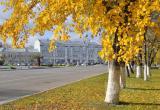 Осеннее тепло возвращается: прогноз погоды в Вологде до конца рабочей недели