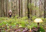 В Вологодской области пропавшего пенсионера ищут уже пять дней