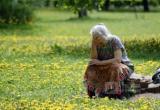 Очередная пропавшая пенсионерка в Вологодской области: ушла за грибами, а ищут уже третий день