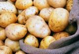 Картофель на пятерку, с зерном куда сложнее: отчет сегодня держали агрономы Вологодчины