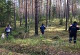 Грибник спал на дереве в Вологодской области