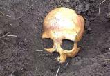 """""""Добычей"""" шекснинского рыбака стал человеческий скелет: с находкой работают криминалисты"""