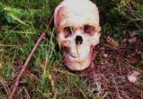 ВНИМАНИЕ! Устанавливается личность погибшего человека, скелет которого обнаружен в Шекснинском районе