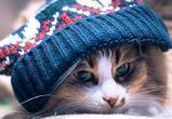 Вологжане могут готовиться к зимним холодам