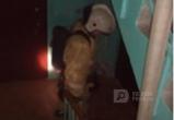 80-летняя бабушка едва не сгорела заживо в своей квартире на улице Некрасова в Вологде