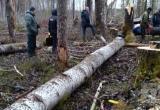 СК проверит факт гибели рабочего под упавшим стволом дерева в Вологодской области