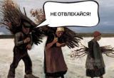 Россиянам помогут разобраться, что они могут бесплатно собирать в лесу: Валежник, ветровал или сухостой