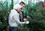 «Из лесу елочку взяли мы домой…»: эксперты Роскачества рассказали, как выбрать самую лучшую елочку на Новый год