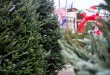 Купить настоящую елку в Вологде можно будет с 21 декабря