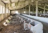 Просто скотство! С 1992 года поголовье крупного рогатого скота на Вологодчине упало на 72 процента!