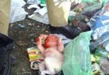 Труп новорожденной девочки нашли на сортировочном полигоне в Вологде