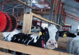 Молочная ферма с роботами открылась в Вологодском районе