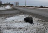 Поездка на тот свет: архангельская автоледи убила вологжанина в страшном ДТП
