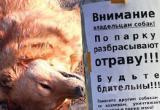 Очередной догхантер активизировался на Вологодчине: на этот раз под угрозой собаки в Соколе (ФОТО)