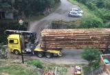 Экспорт леса за границу может быть приостановлен
