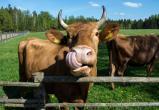 Сельское хозяйство Финляндии на пороге кризиса