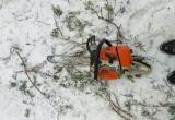 В Бабушкинском районе полиция поймала с поличным «черного лесоруба» (ФОТО)
