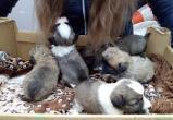 Милота в погонах: вытегорские инспекторы ГИБДД спасли пятерых брошенных щенков (ФОТО)