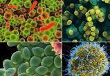 Микробы, кругом одни микробы. Врачи назвали топ-10 самых грязных вещей