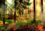 В Вологодской области любителей сжигать сухую траву ждут огромные штрафы