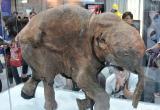Сибирскую язву и болезни мамонтов — вот что может принести человеку таяние вечной мерзлоты