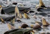 В период нереста на реках и озерах Вологодчины рыбачить запретили