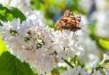 Настоящая весна пришла на Вологодчину