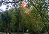 В Череповце ребенка с дерева снимали спасатели