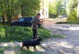 Жестокость человека порождает жестокость животного: в Вологде мужчина издевается над собакой