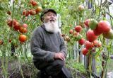 Российским дачникам разрешили забирать лишние участки земли