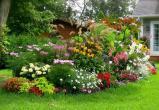В Вологодской области 100 тысяч получат лучшие огородники и цветоводы