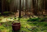 Жительница Устюжны сутки искала выход из леса