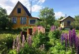 Дачники Вологодской области рискуют остаться без электричества