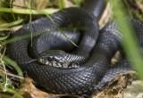 Если вас укусила змея