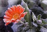 В Вологодской области зафиксирован рекорд низкой температуры