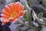 Погода в Вологодской области ставит рекорды. Впервые за 100 лет температура воздуха опустилась до нуля