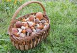В МЧС рассказали, как найти съедобные грибы