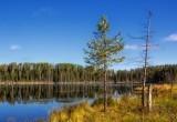 Рекомендации от спасателей для любителей лесных прогулок
