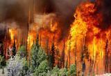40 шаманов на Байкале будут спасать леса Сибири. Лесные пожары в России охватили площадь в 3 млн га