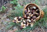 54-летний грибник погиб в Великоустюгском районе
